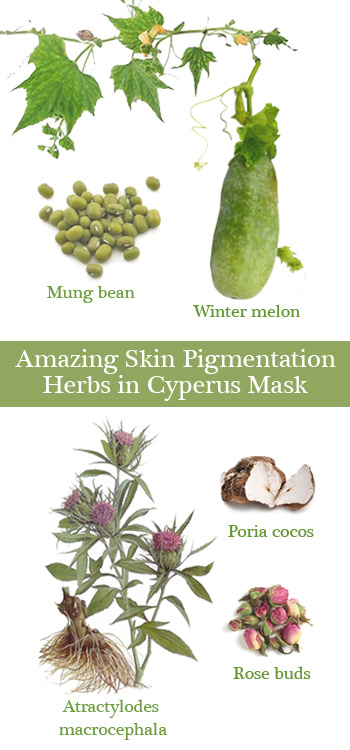 Cyperus skin pigmentation mask's contain 100% herbal ingredients that treat Melasma, freckles and dark spots effectively.